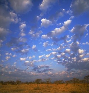 Africa steppe-GS