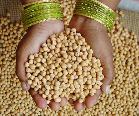 chickpea-sourceCGIAR